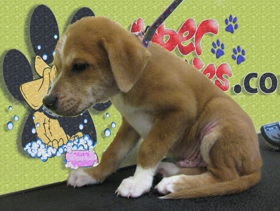 Orphan Puppy Needs Your Help!!! Call Tea Leas 1(309)265-5190 E-Mail: tialeas25@yahoo.com